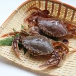 ヒラツメガニ(平爪蟹)の基礎知識と旬や食べ方
