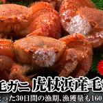 2015/11/26【最北の海鮮市場】歳末BIGセール開催中!幻の虎杖浜産毛ガニの大型500g前後が5%OFF!