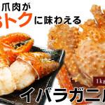 2015/11/25【最北の海鮮市場】大好評につき11/30の13時までセール延長!旨味が凝縮された爪肉をお得に味わえます