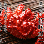 2015/11/20【かにと言えば北海道北釧水産】緊急入荷!花咲がにの濃厚な甘さを最大限に茹で上げ、ぷりぷりとした食感が最高!