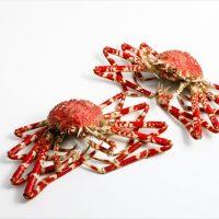 タカアシガニ(高足ガニ)の基礎知識と旬や食べ方